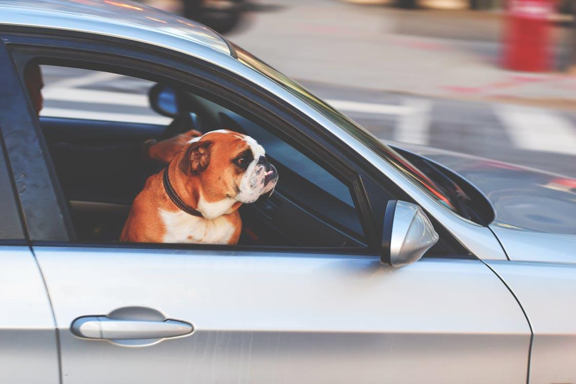 In viaggio con il proprio cane: consigli utili!